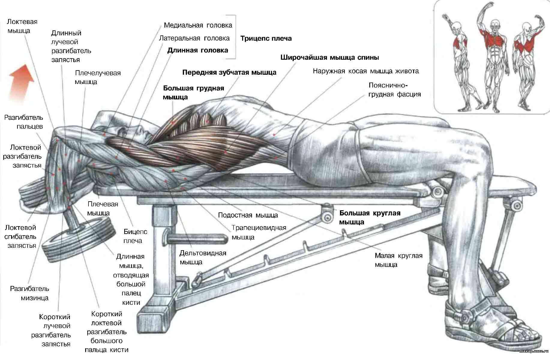 Прокачать мышцы спины в домашних условиях 307